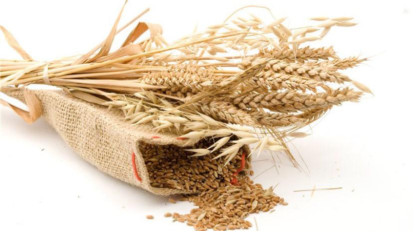 Вакансия Менеджер по закупу зерновых культур